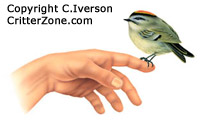 bird sitting on human hand, illustration, art, nature, wildlife