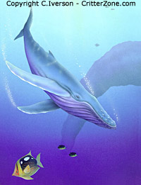 whale underwater, illustration, art